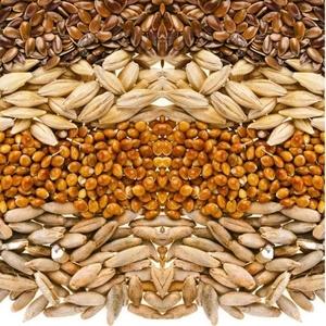 Семена яровых культур на посевную кампанию 2018 года