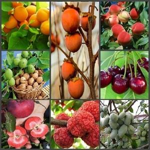 Саженцы редких плодовых и декоративных растений