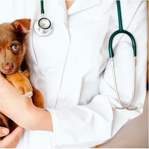 Срочный вызов ветеринара на дом