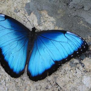 Продажа Живых тропических бабочек из Африки   более 30 Видов