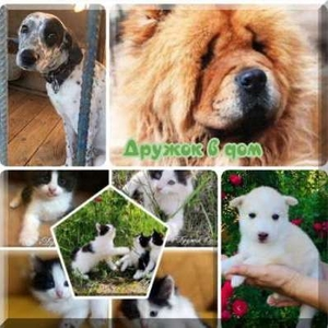 Собаки и щенки в дар