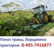 Услуги трактора по покосу борщевика ,  покос бурьяна Московская область
